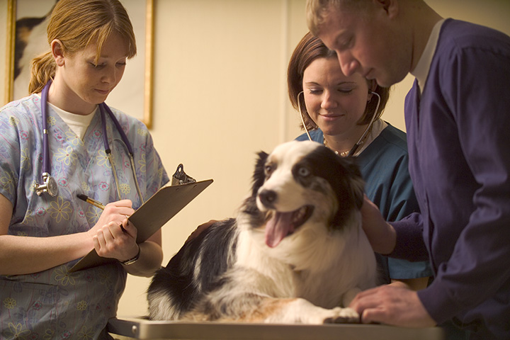 Veterinarian Business Insurance Quotes